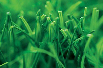 Спортивная трава – Limonta –  Soccerpro max s 50